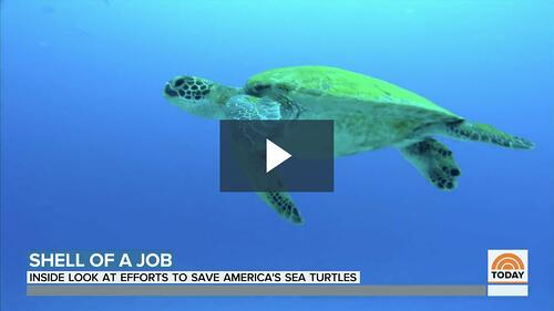 Loggerhead MarineLife Center Featured on the Today Show